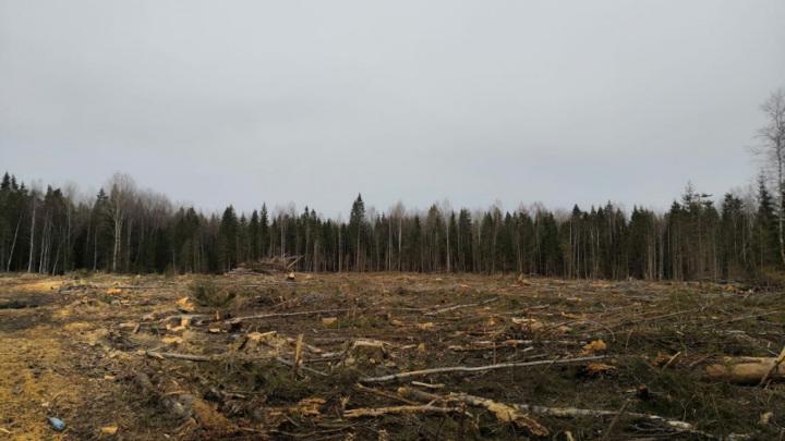 Житель Тверской области незаконно вырубил деревья на 10 миллионов рублей