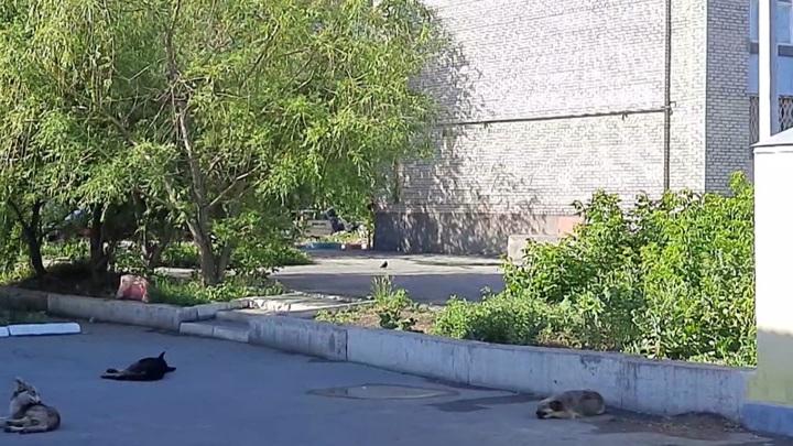 Мэрию Оренбурга обвинили в бездействии по проблеме диких собак