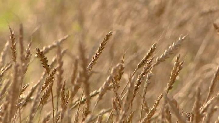 В Прикамье из-за засухи введут режим ЧС
