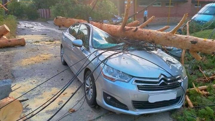 В Тольятти упавшее на машину дерево раздавило женщину