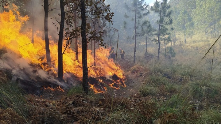 В Карелии введен режим ЧС. На площади7 280 га действует 33 пожара