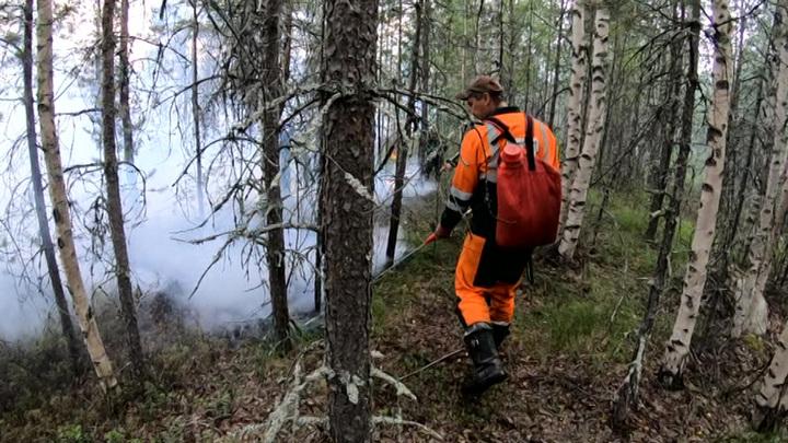 Борьбу с лесными пожарами в Выборгском районе ведут военнослужащие
