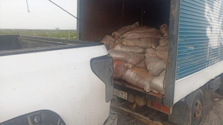 Житель Камчатки наловил рыбы на уголовное дело