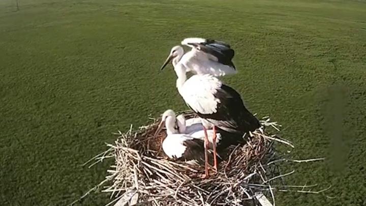 В Благовещенске появится центр реабилитации для редких птиц
