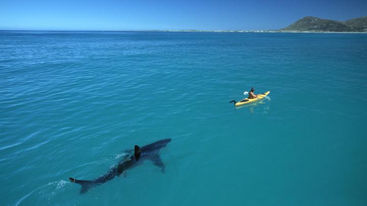 В акватории Владивостока на видео попала стая акул