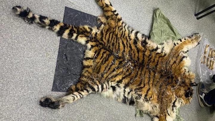 Продажу шкуры и других частей амурского тигра пресекли в Приморье