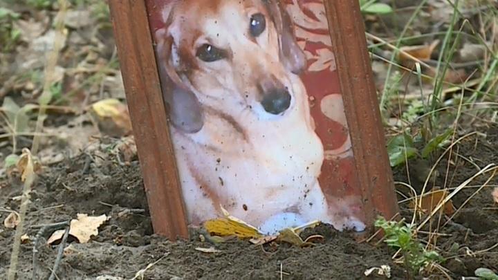 В Рязани продолжают разрастаться кладбища домашних животных