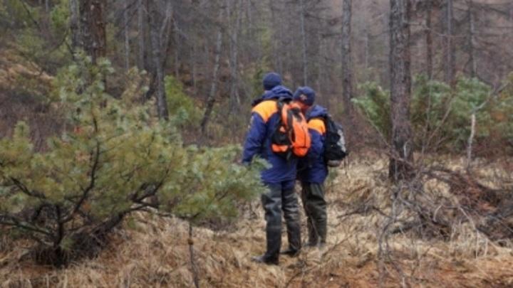 Бабушка-грибник потерялась в лесу Мурманской области