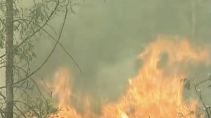 Пожар в Андалусии на юге Испании уничтожил около 7,5 тысяч га леса