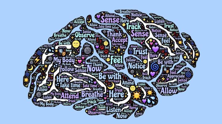 Каждая из сетей мозга имеет разные характеристики, работает в разных областях мозга и использует разные нейрохимические вещества и гены.