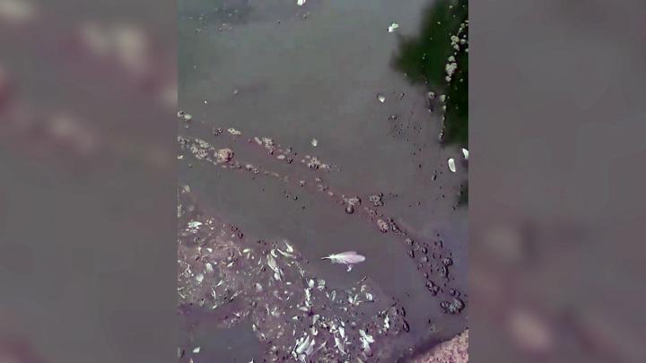 Возможно что-то слили: в Приморье вода в озере Чан поменяла цвет