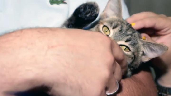 Семья из Швейцарии прилетела в Иркутск, чтобы забрать котенка из приюта