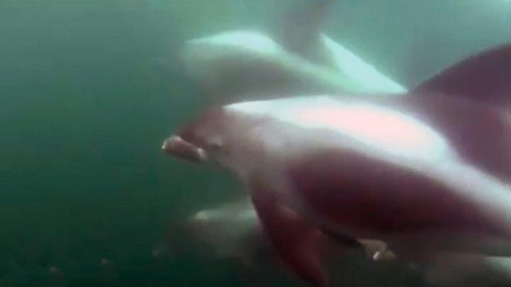 Гонки с моторной лодкой: в Баренцевом море дельфины спели рыбаку