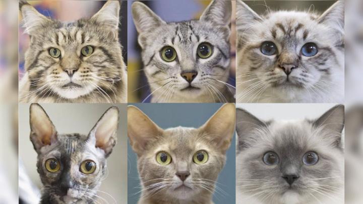 """Кошка является одним из самых популярных домашних питомцев, но при этом учёным мало известно о тонкостях """"внутреннего мира"""" этих животных."""