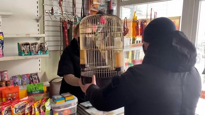 Парень-романтик своровал попугаев, чтобы порадовать ими девушку