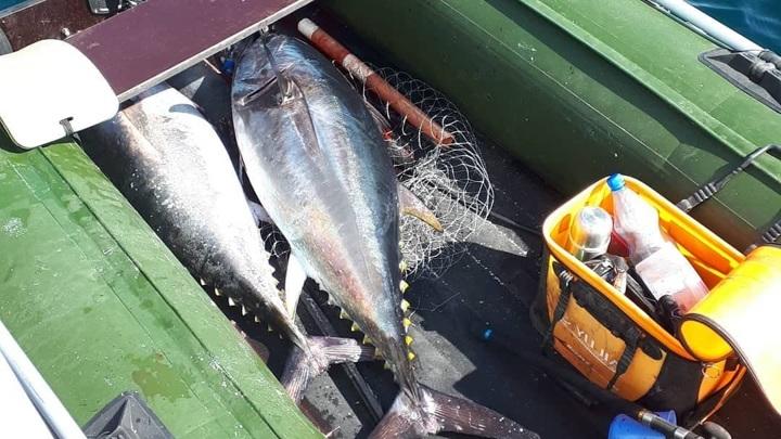 Сахалинец поймал огромного тунца и тут же попался пограничникам