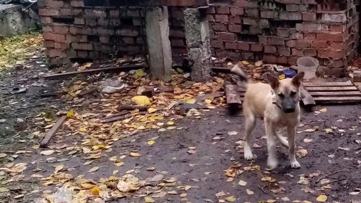 Без воды и еды: в Ржеве неравнодушные взяли щенка, привязанного к трубам теплотрассы