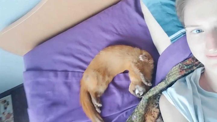 Зверь на балконе: кемеровчанка спасла сибирского хищника
