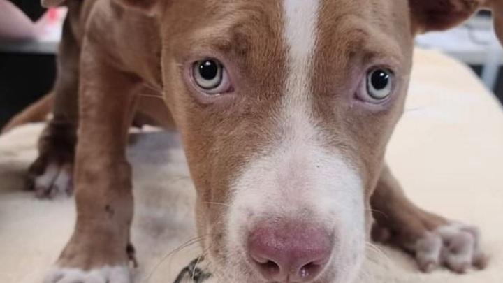 Актер объявил вознаграждение за поимку садиста, искалечившего щенка