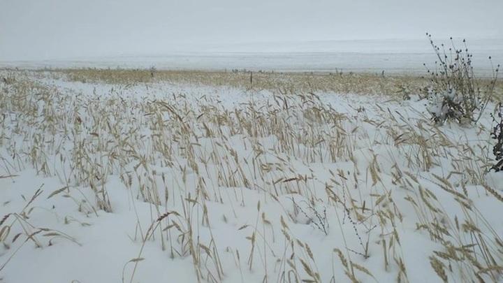 Первый снег ожидается в Москве 19 октября