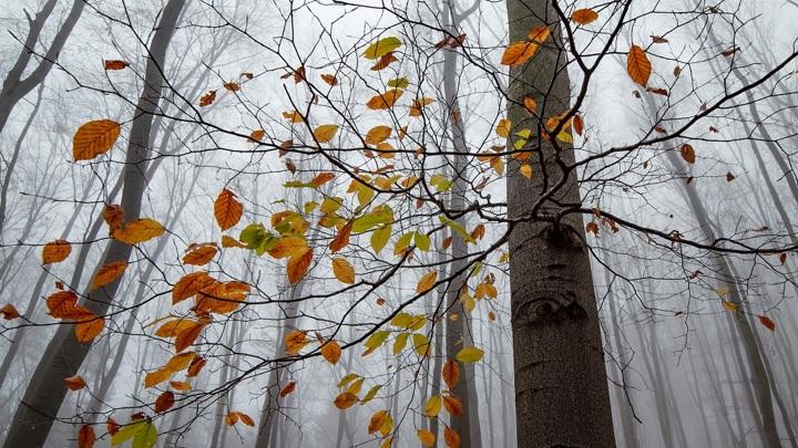 Челябинскую область накроет туман