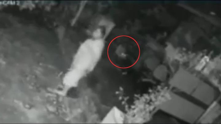 Пожилая индианка отбилась от леопарда, напавшего на нее во дворе. Видео