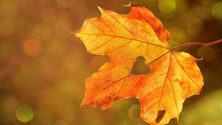 Перед похолоданием жителей Южного Урала ждет самый жаркий день октября