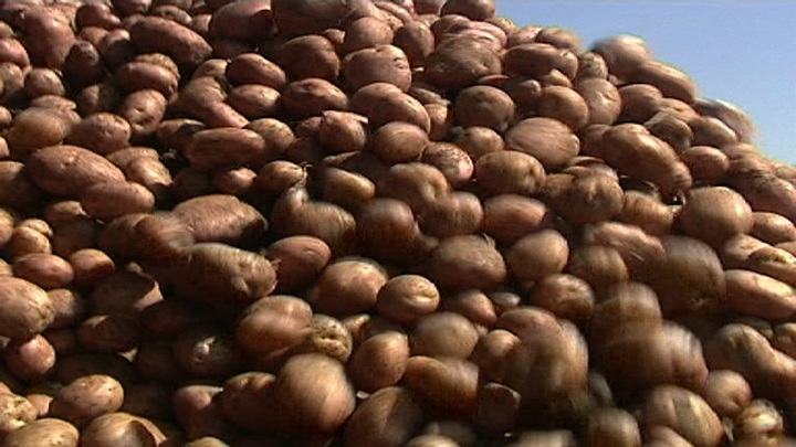 Власти Ростова обратились в УФАС из-за цен на картофель