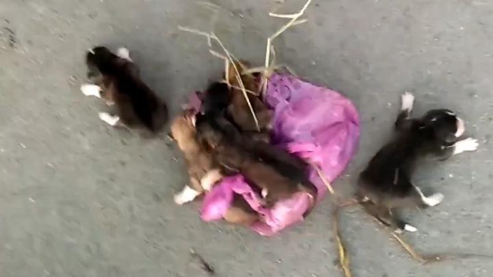 Неизвестные выкинули щенков в мусорку на верную гибель