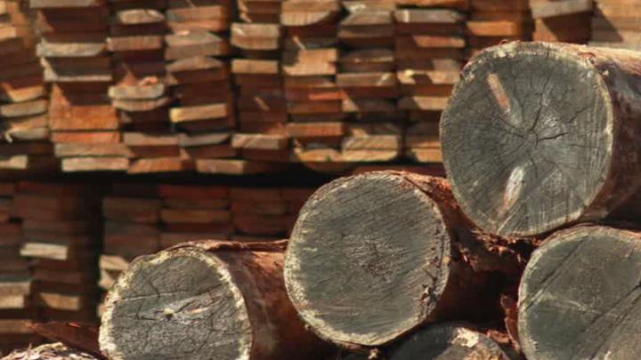 С начала 2021 за границу отправили 212 тысяч кубометров амурской древесины