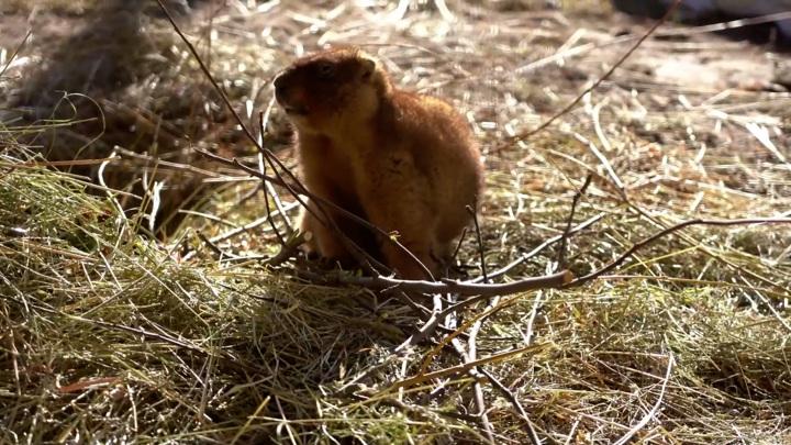 Ночь сурка: Московский зоопарк рапортует о начале зимы