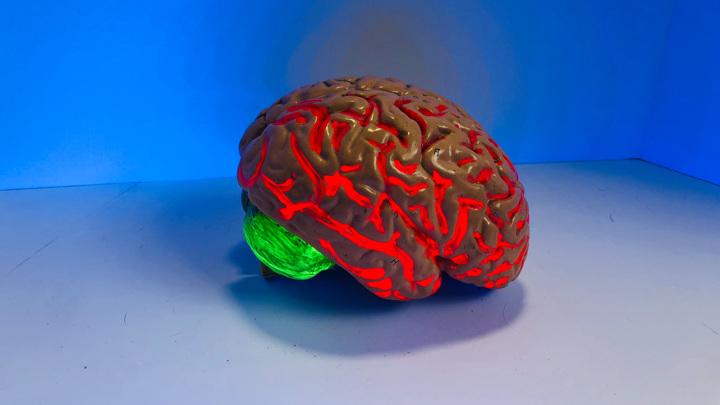 Учёные не первый год исследуют необычное влияние некоторых инфекций на развитие опасных заболеваний мозга.