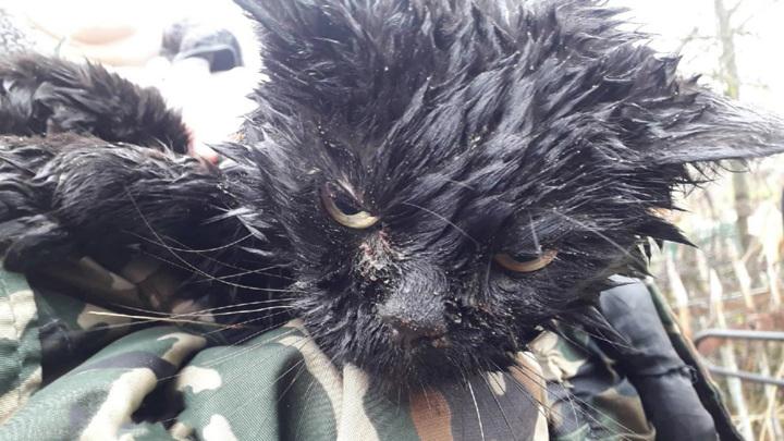 Во Владимирской области кота снимали с дерева спасатели