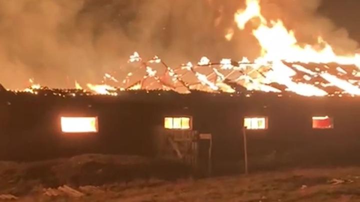 57 коров и коз спасли из горящей фермы в Башкирии