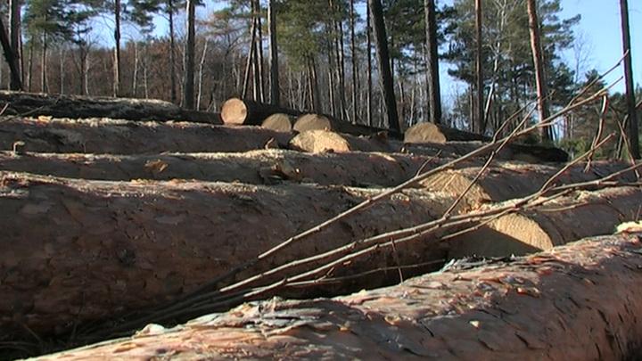 """Черный лесоруб из Амурской области ответил за """"убитые"""" деревья"""