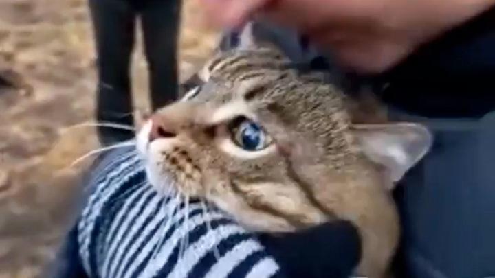 Спасатели вынесли кота из пострадавшего при взрыве челнинского дома