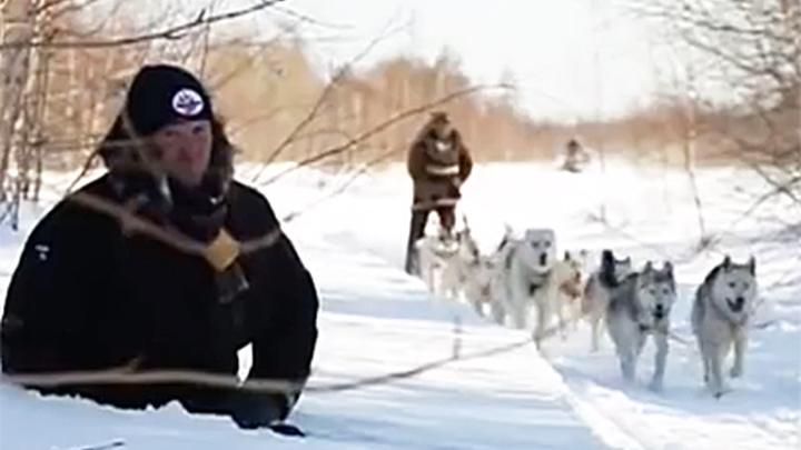 Григорий Манёв и камчатская ездовая собака