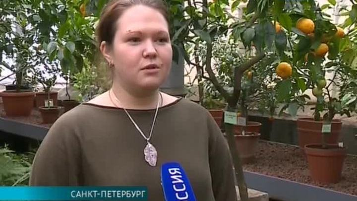 В Ботаническом саду Петербурга появился новогодний маршрут